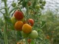 demeter-landwirtschaft-luisenhof